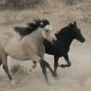 Sun Dance in the Wild Horse Sanctuary