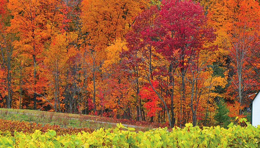 canada-fall-colors-by-rail